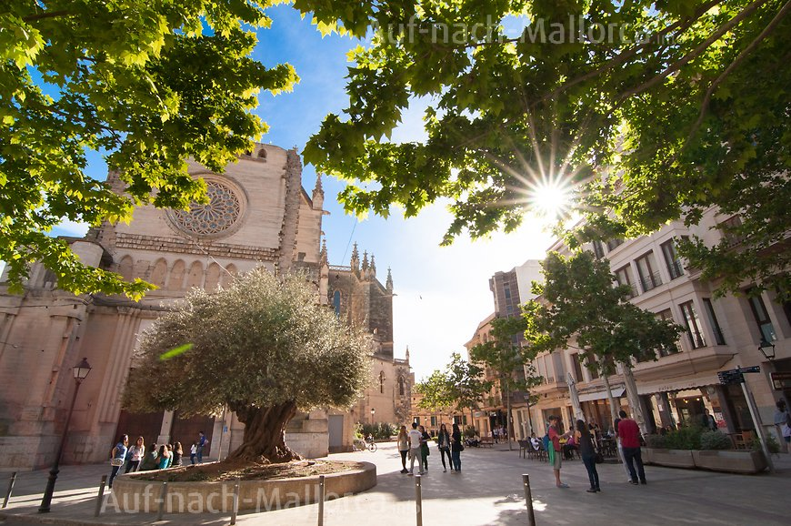 Finca Son Cigala: Shoppen in Manacor
